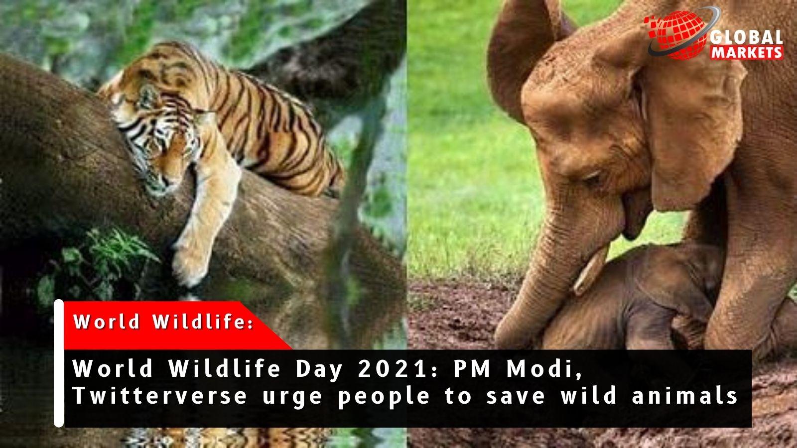 World Wildlife Day 2021: PM Modi's rise in big cat population.
